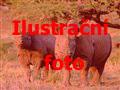 Keňa - Tanzanie safari - S výstupem na Mt. Keňu