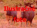 Dovolenka Keňa Keňa - Dokonale safari a oddych na bielej pláži